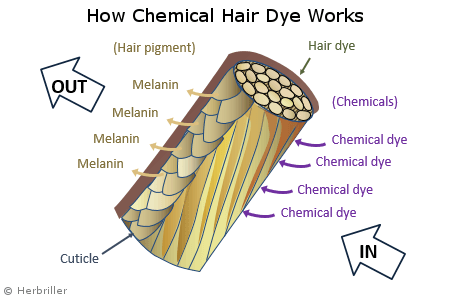 How chemical hair dyes work